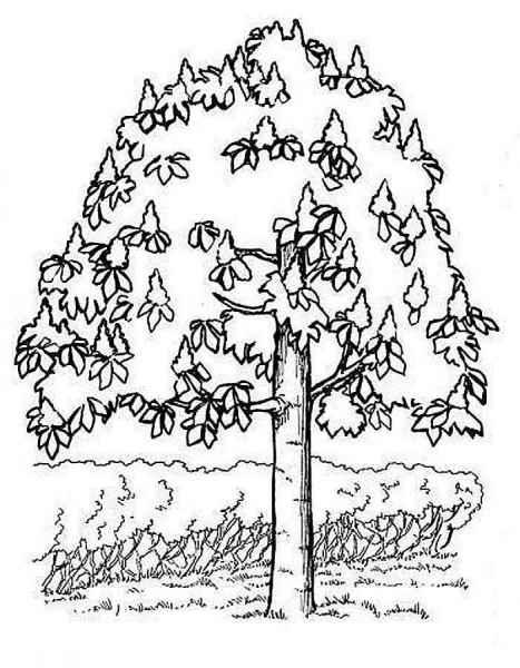 раскраски деревья бесплатно распечатать скачать картинки
