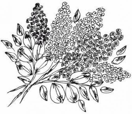 Рисунок для вышивки лентами сирень